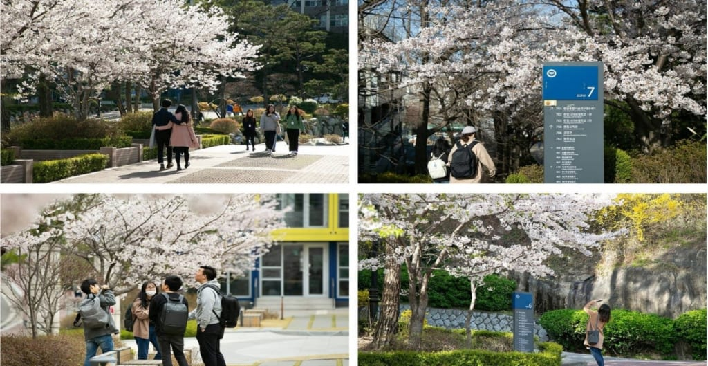 Sinh viên Đại học Hanyang
